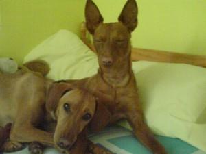 Des nouvelles de Nana et Ixelle (ex Violetta)