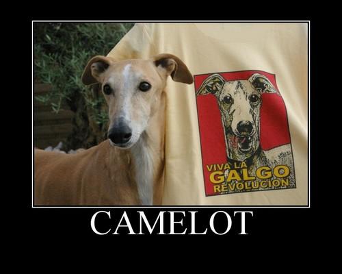Des nouvelles de Camelot