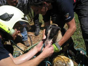 Jetée au fond d'un puits, une galga s'accroche désespérément à ses sauveurs