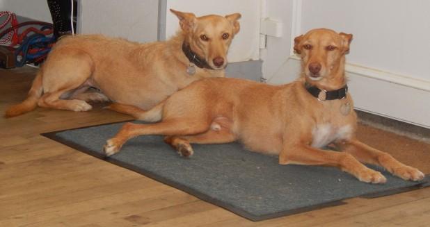 Tina et Tisco, xpodencos de 3 ans